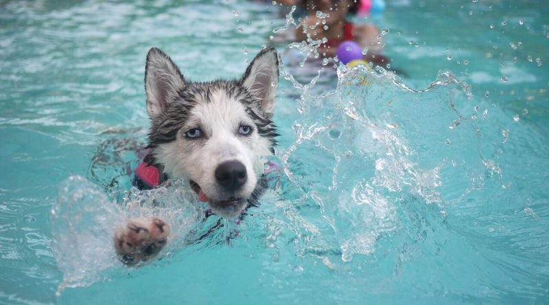 How to Keep Your Dog Cool This Summer – Important Tips