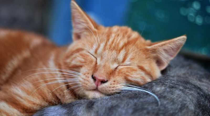 Dying Cat Symptoms Signs that Indicate Your Cat is Dying