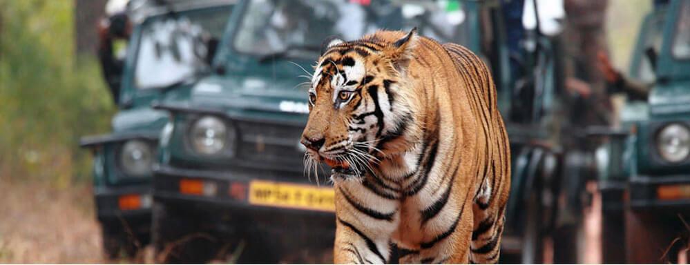 bandhavgarh-national-park Top Destinations for Honeymoon Couples in India