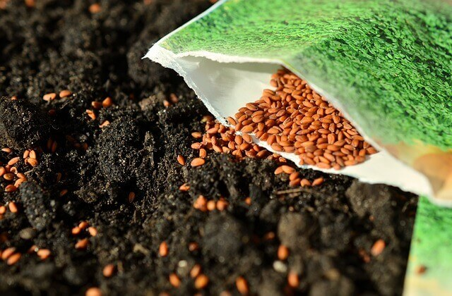 starting to guest blog today - sow more seeds