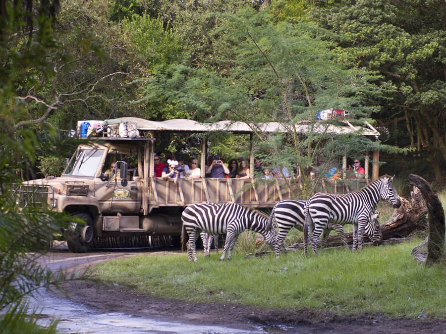 Disneys Animal Kingdom, Orlando Florida - top 10 biggest theme parks