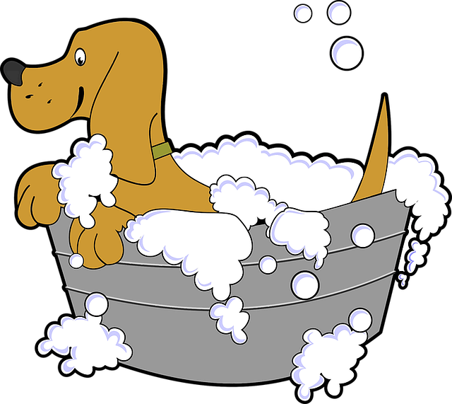Is it Safe to Use Human Shampoo on Dogs