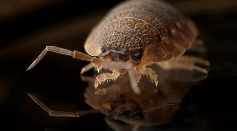 How to Get Rid of Bed Bugs Permanently - Top 10 Ways