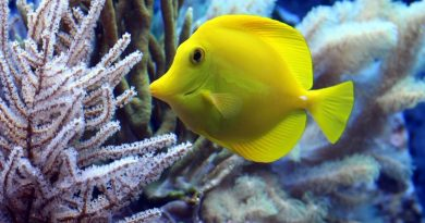 8 Common Myths About Your New Saltwater Aquarium