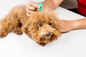 How to Get Rid of Fleas and Ticks on Dogs and Cats