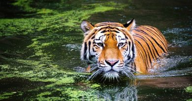 List Of Top 10 Wildlife Sanctuaries In The World