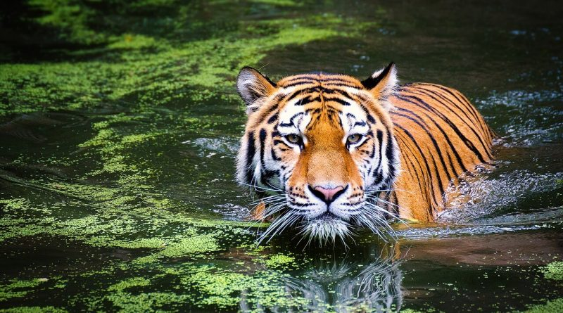 List of Top 10 Wildlife Sanctuaries in the World