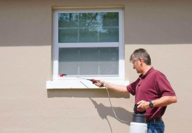 10 Reasons To Get Professional Pest Control Services