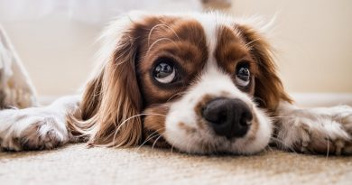 Coughing and Gagging in Puppies? Causes and Remedies