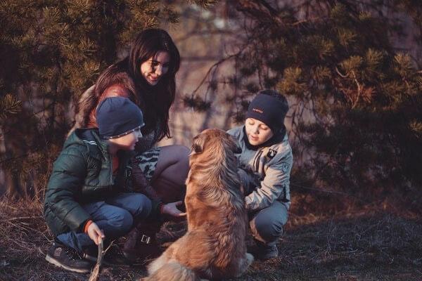 Best family dog breeds