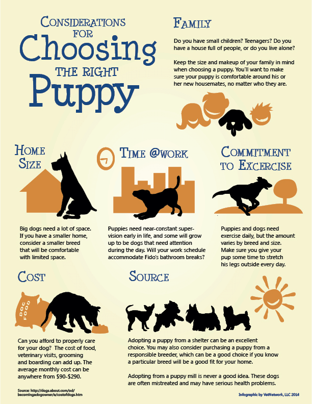 which dog is right for me