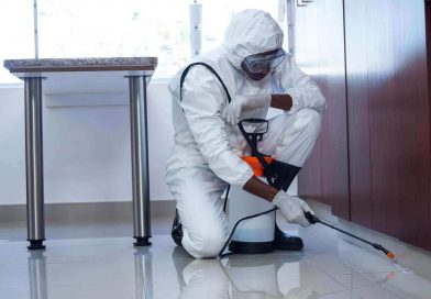 7 Signs You Need to Hire Pest Control Services