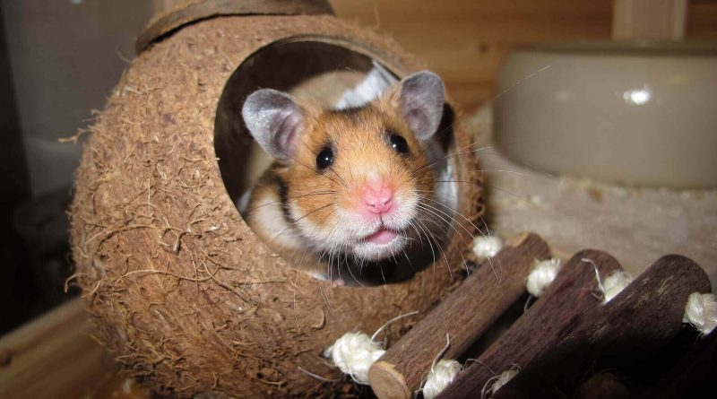 How to Build the Perfect Hamster House