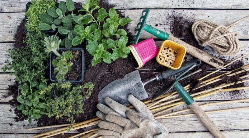 4 Gardening Hacks That Will Transform Your Backyard