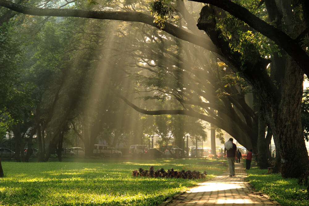 Stroll Around in the Famous Cubbon Park