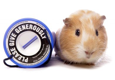 The 10 Best Charities for Animals to Donate to an Animal Welfare Charity