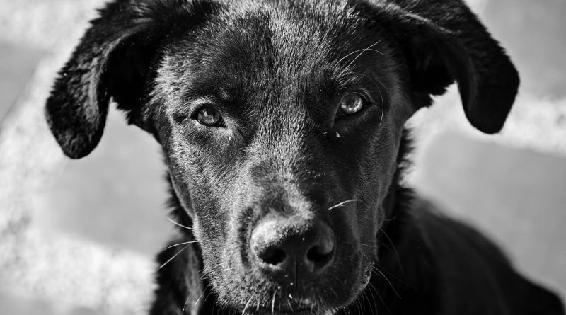 5 Tips to Care for an Abandoned and Malnourished Dog