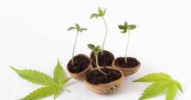 Become a Marijuana Mogul: 10 Expert Tips for Marketing Your CBD Business