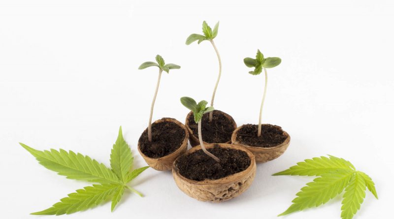 Become a Marijuana Mogul 10 Expert Tips for Marketing Your CBD Business