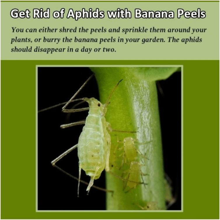 Uses of Banana Peel