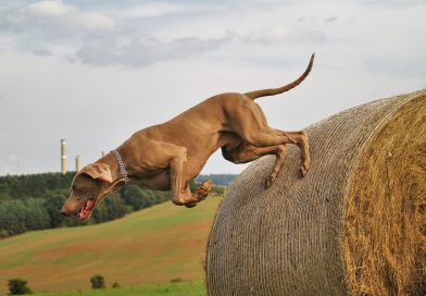 Helpful Tips For Calming Your Hyperactive Dog