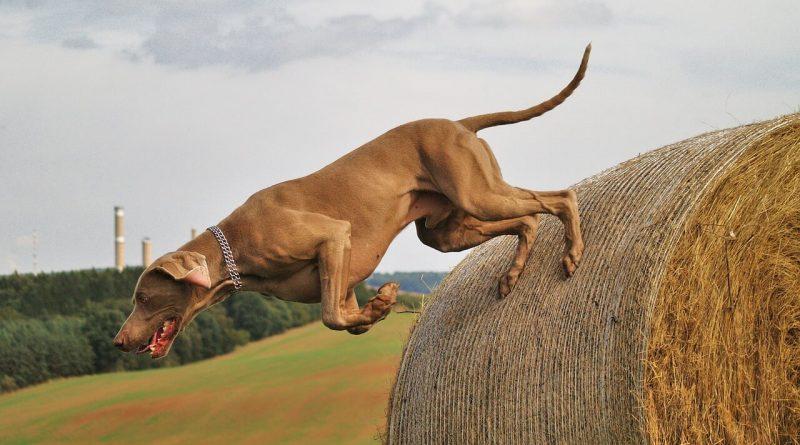 CALMING YOUR HYPERACTIVE DOG