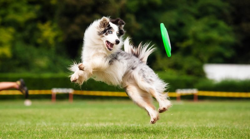 Fit Fido How to Exercise Your Dog Right in Your Backyard