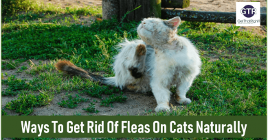Fleas On Your Cats: Learn How To Get Rid Of Fleas On Cats Naturally