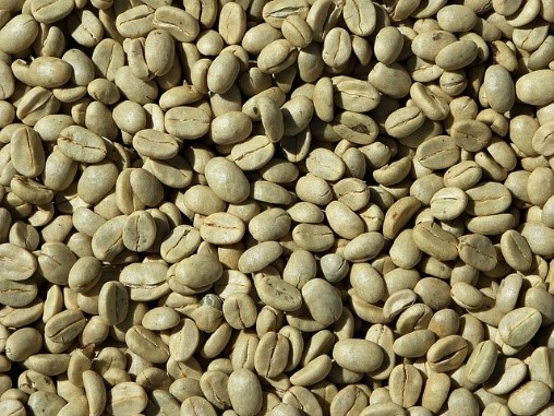Green Coffee Helps in Losing Weight