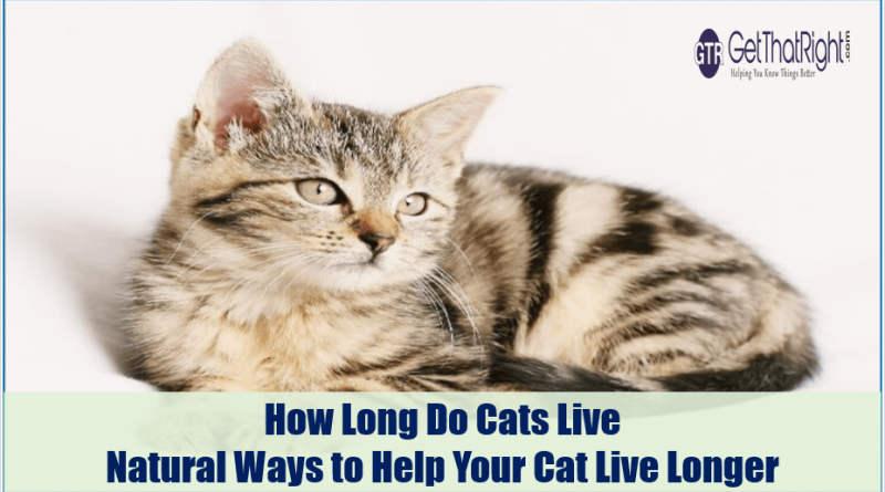 How Long Do Cats Live - Natural Ways to Help Your Cat Live Longer