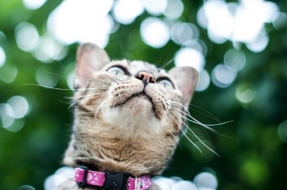 Natural Flea Collars for Cats