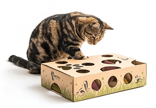 Natural Ways to Help Your Cat Live Longer
