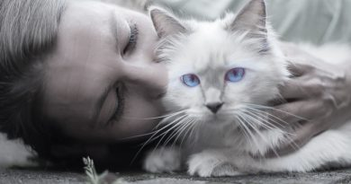 First Time Cat Owners: Important Things to do Before Bringing a Cat Home