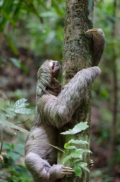 Sloth-Spotting in Costa Rica