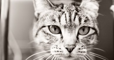5 Cat Facial Expressions and What They Mean: Understanding Cats
