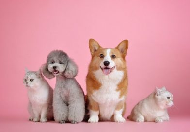 Cats vs Dogs: 10 Reasons Why Cats Are Better Than Dogs