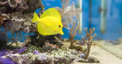 Bringing Nemo Home: How to Get a Saltwater Fish Tank Set Up