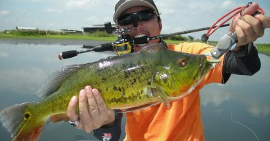 How To Catch Bass Like An Elite Angler