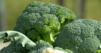 Freezing Broccoli: Learn How to Freeze Broccoli the Right Way